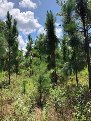 Listing Search Florida Real Estate, Land and Acreage by The